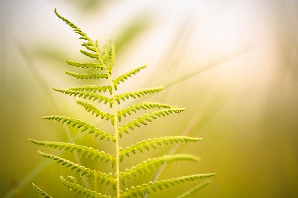 fauna-flora-140801-0002.jpg