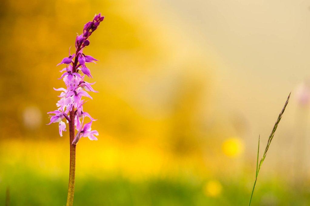 fauna-flora-150604-0006.jpg
