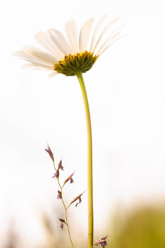 fauna-flora-150712-0009.jpg