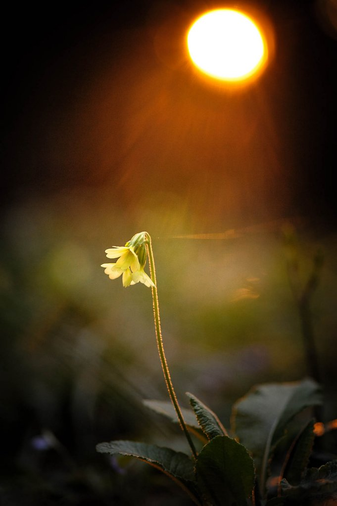 fauna-flora-160410-0014.jpg