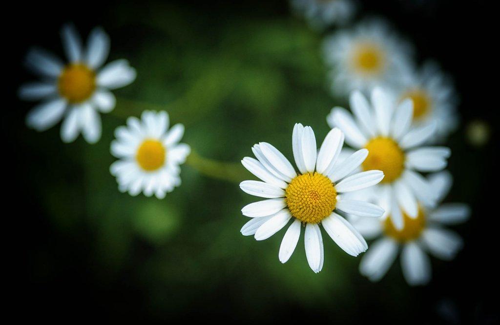 fauna-flora-160610-0016.jpg