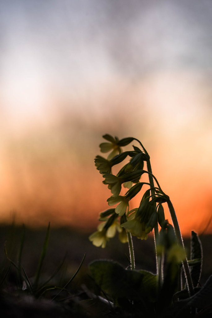 fauna-flora-170326-0027.jpg