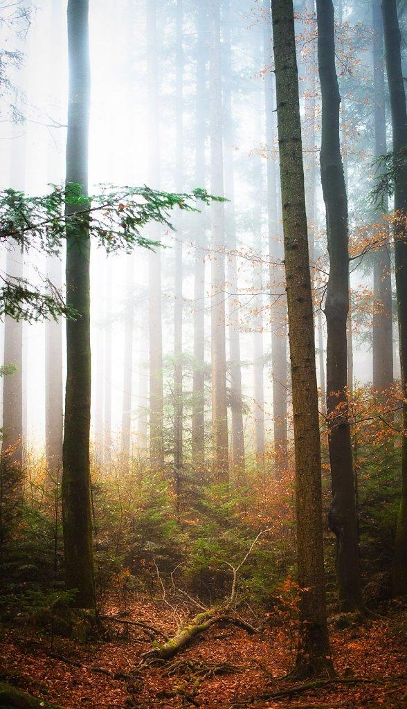 taubenberg-nebel-0007.jpg