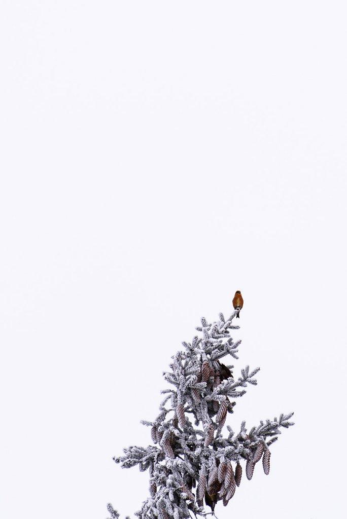 vogel-0001.jpg